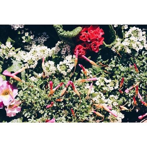 土と花と素直と笑顔♪ イメージ画像