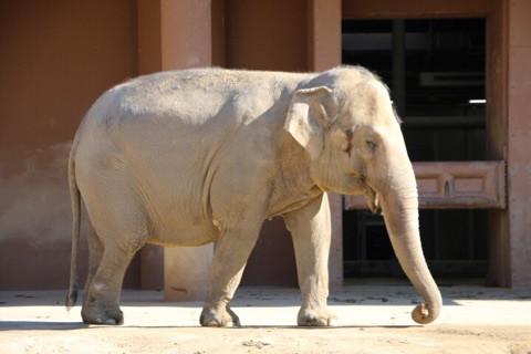 娘と動物園の日 イメージ画像