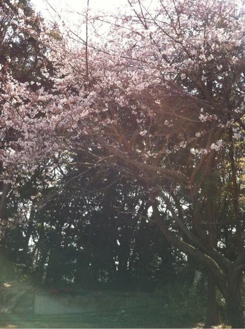 春散歩 イメージ画像