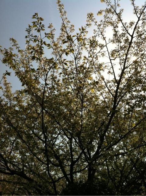春のパワー イメージ画像